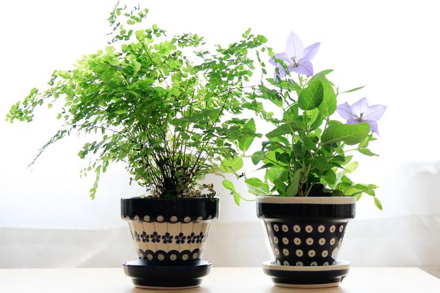 2planters.jpg